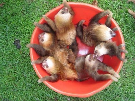 25_sloths